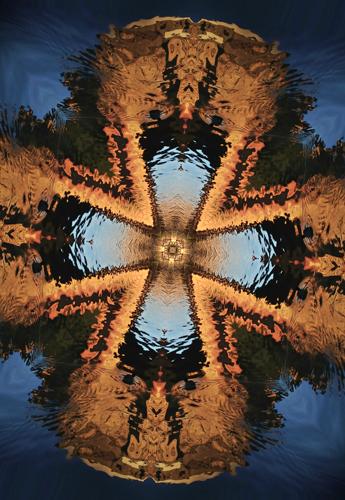 PFA 03 Kalied web