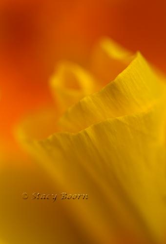 March2-Poppy001 copy