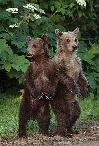 2 cubs 02 web