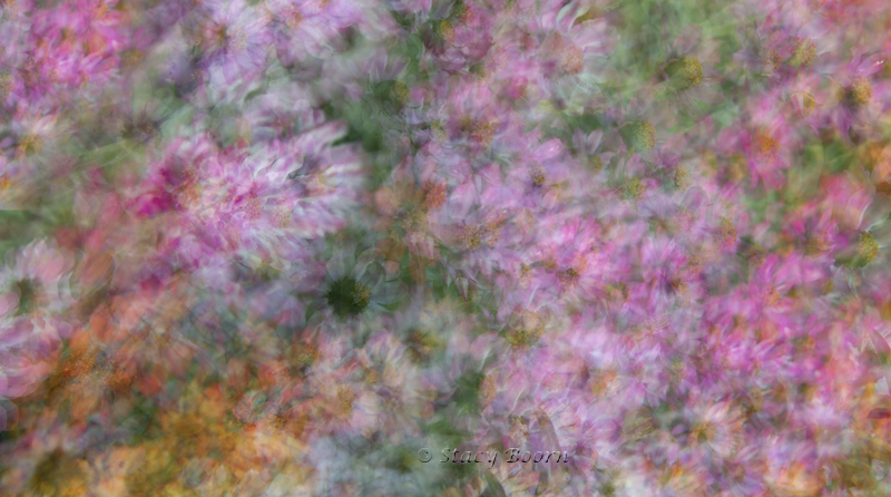 Oct 1 - PastelFieldWeb
