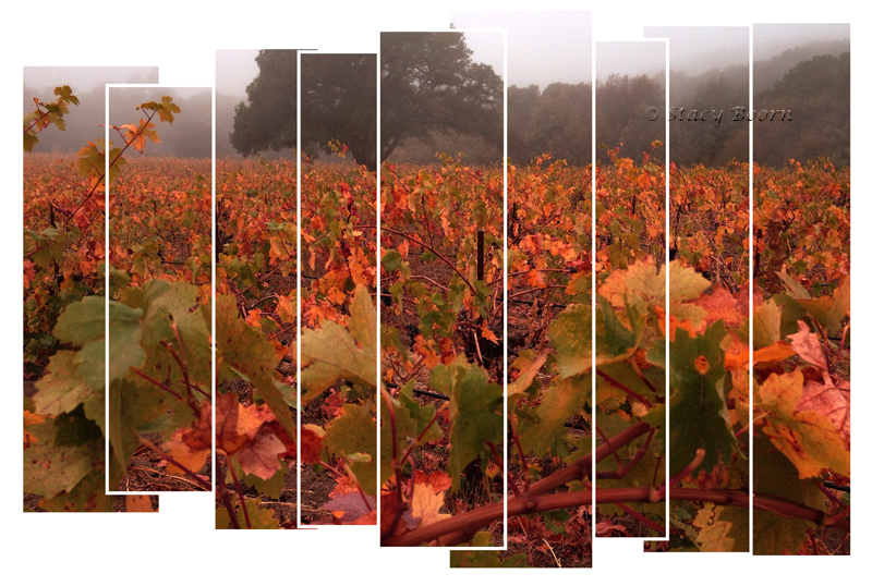 Oct 4 - Vineyard2 web
