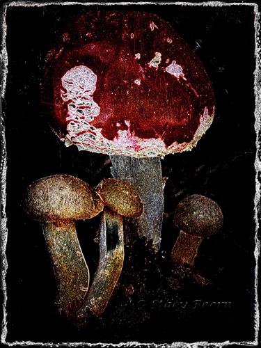 Jan 3 -MushroomMetalicweb