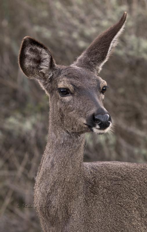 March 1 - deer  WEB