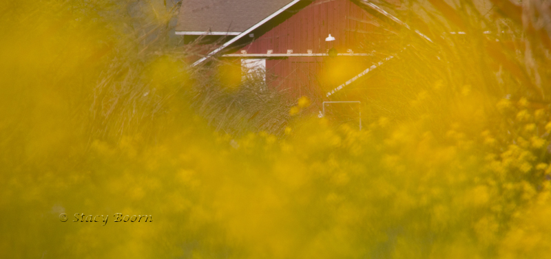 Zoomed to 150 mm, f/5.6, I focused just before the Red Barn of Leap Frog Winery to create this mystic moment!