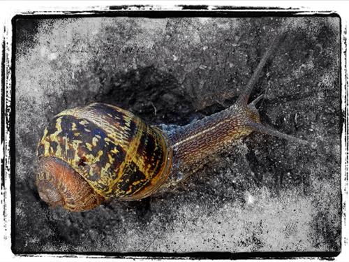 April 2 - WEB snail