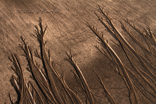 Lines left in sand by receding tide - MacKerricher State Park.