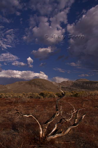 Oct2 - Mono Basin WEB