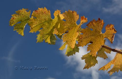 Dec 2 - Grape Leaves copy