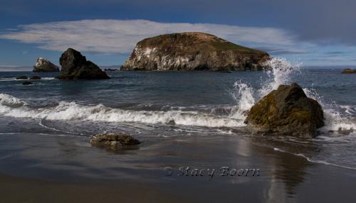 Aug wk 4 - Harris Beach copy