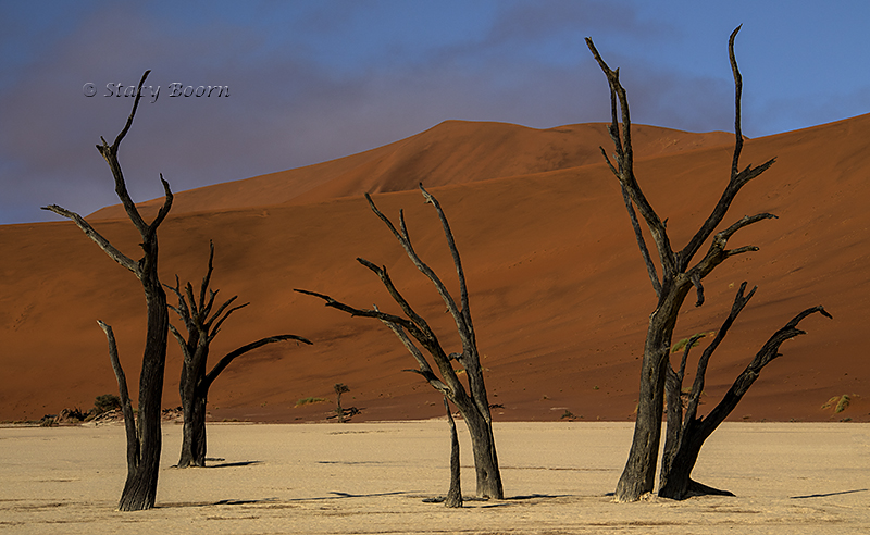 Deadvlei after the fog lifted.