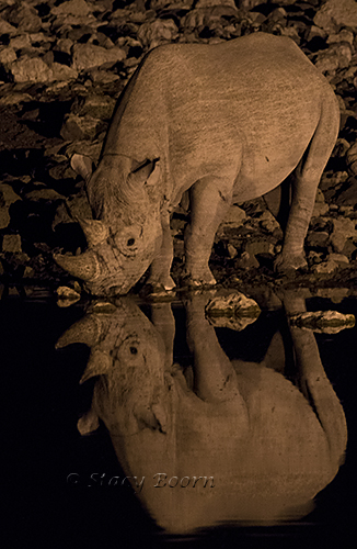 namib-a-rhino-night-copy