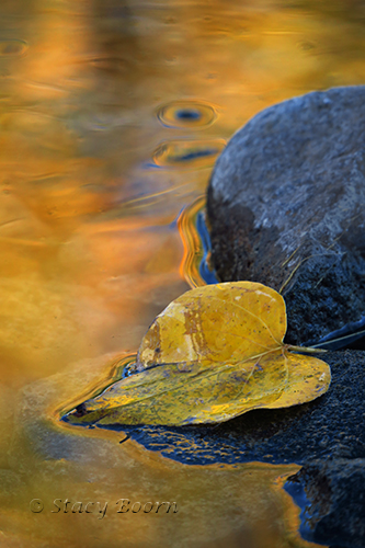 Black Cotton Reflect Yellow in Truckee River
