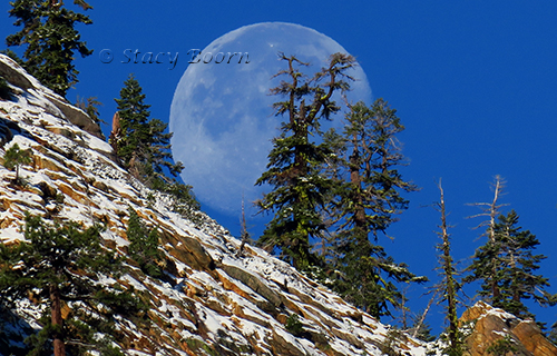 oct-3-moonpines-copy