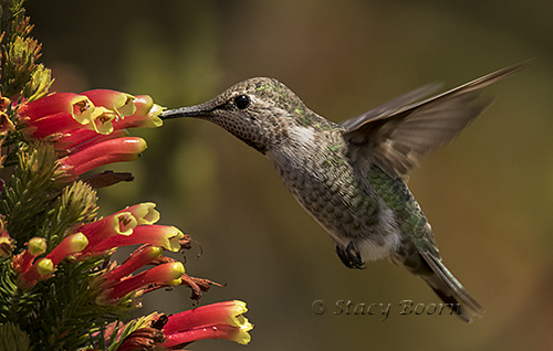 oct-4-humming-bird-01-copy