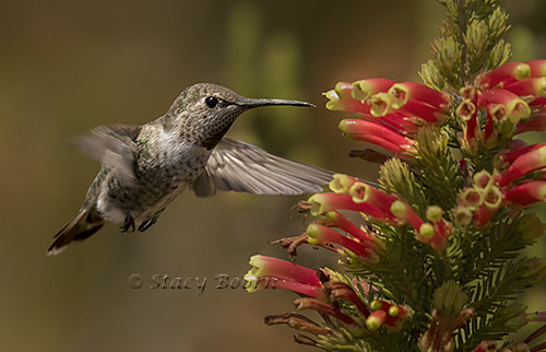 oct-4-humming-bird-02-copy